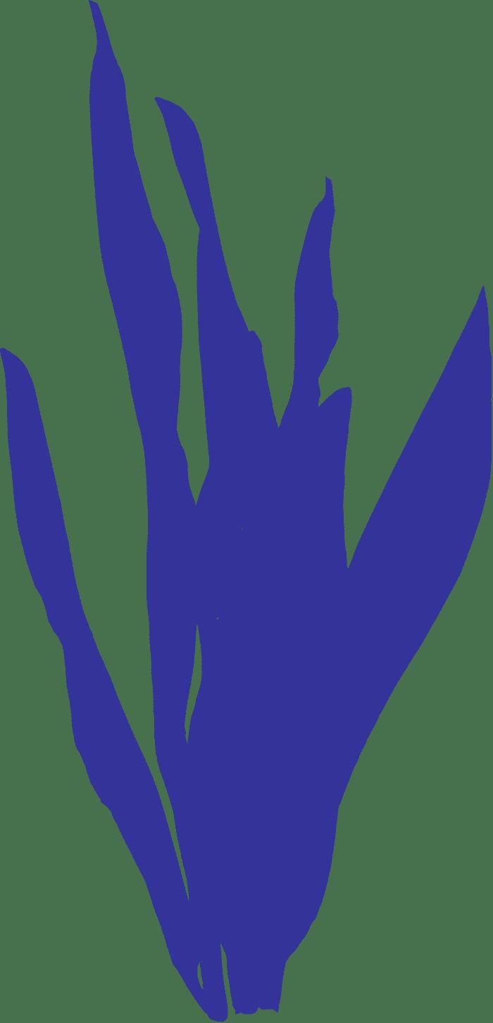 feuillage-bleu