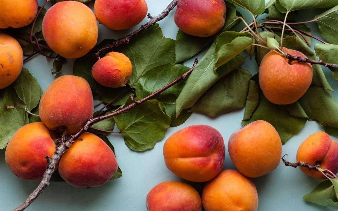 l'huile végétale d'abricot